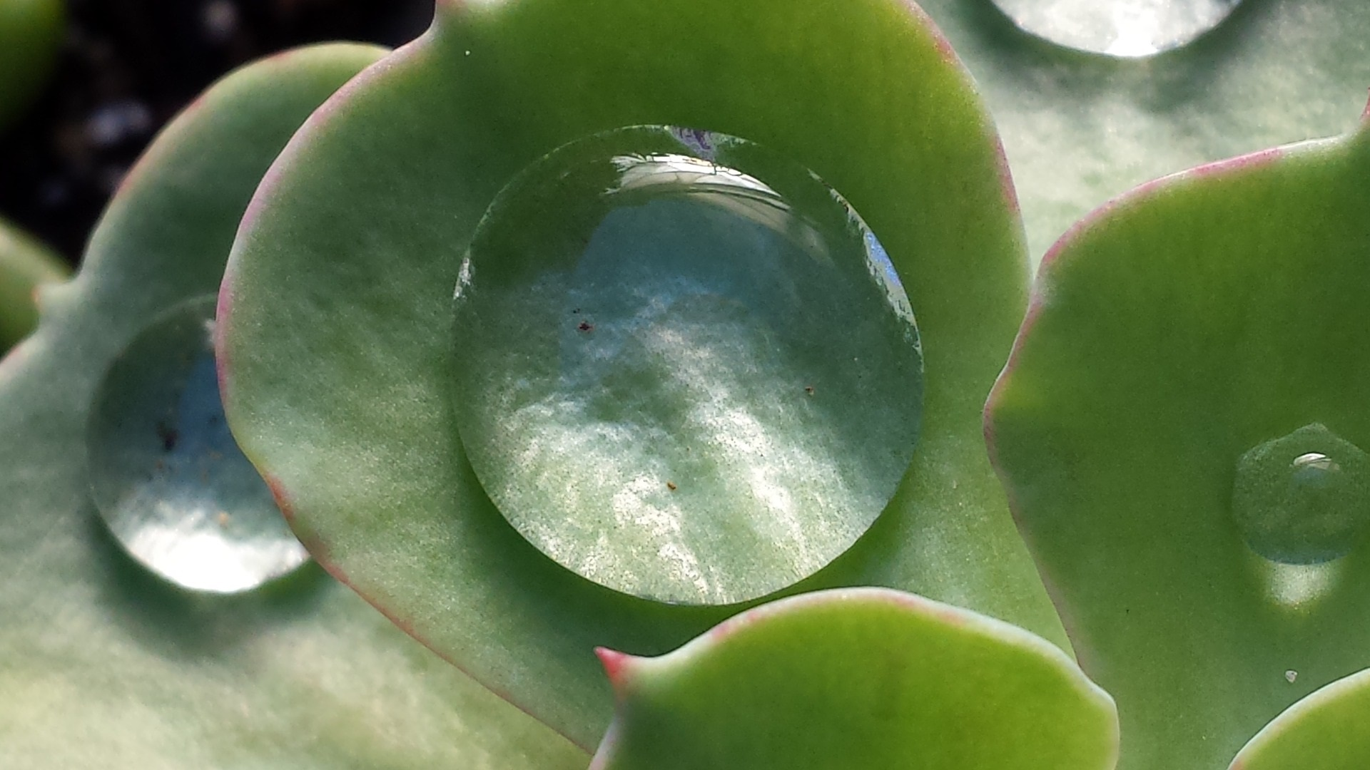 How to Water Succulents – Your Plants Will Tell You!