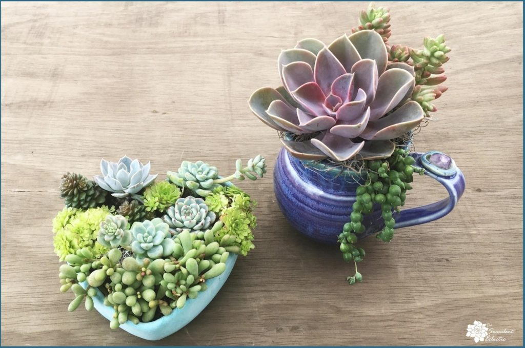 mixed succulents in containers with drilled drainage