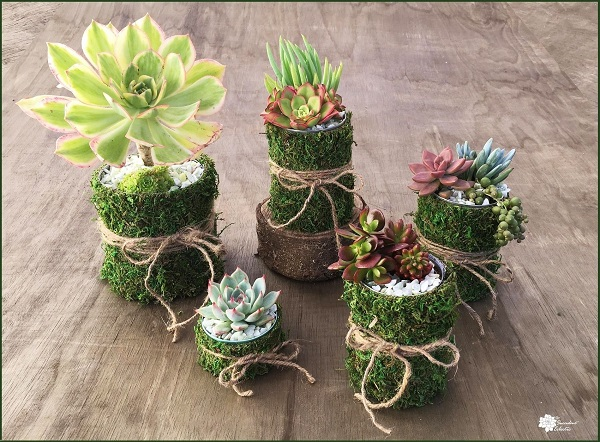 DIY Succulent Planters – Tin Can Mossy Pots!