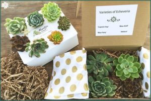 Unboxing Mountain Crest Gardens Succulents