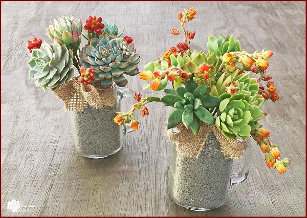 DIY Succulent Bouquet in Mason Jar Mugs!