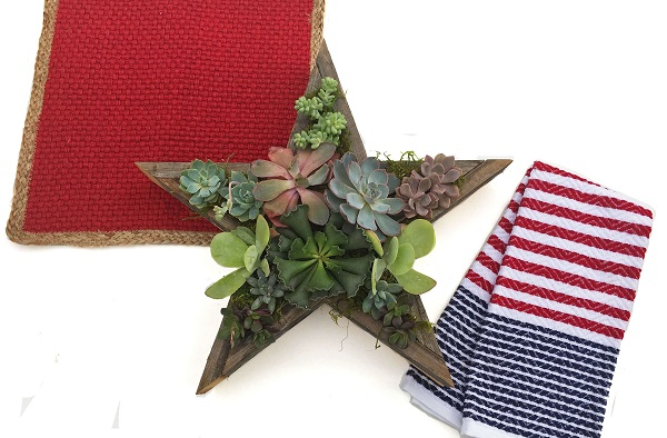 4th of July DIY Star Shaped Planter w/ Succulents