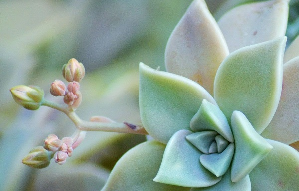 Succulent Care Secret – Why Favorites Die & Others Thrive