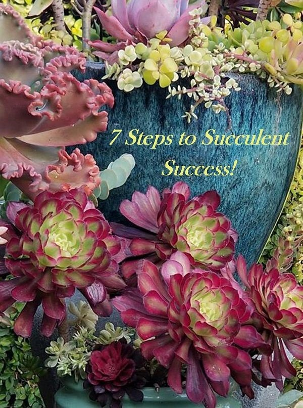 7 steps to succulent care