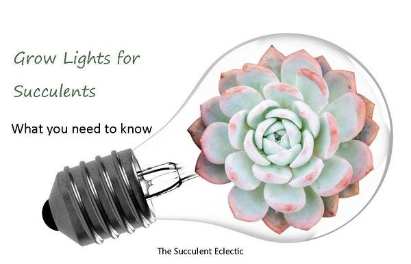 Grow Lights for Succulents | A Simple Guide