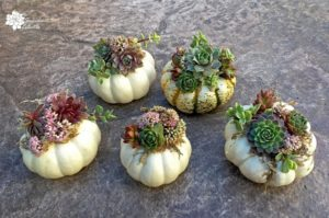 DIY Mini Succulent Pumpkins Tutorial