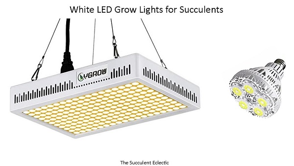 white led grow lights are best for succulents and people