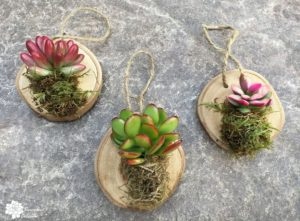 DIY Wood Slice Ornaments with Succulents!