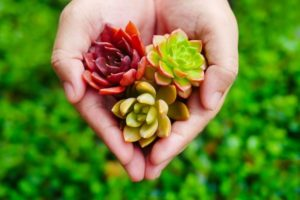 Read more about the article Succulent Care Through Touch