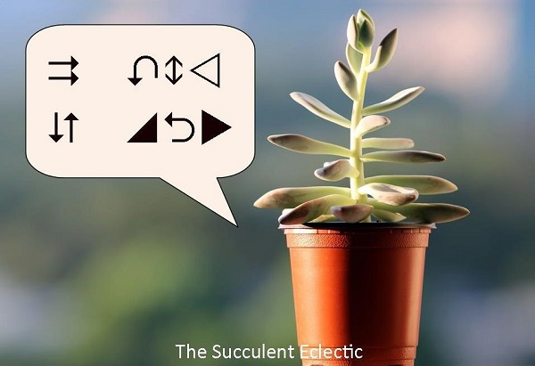 Recognizing & Understanding Signs of Succulent Problems