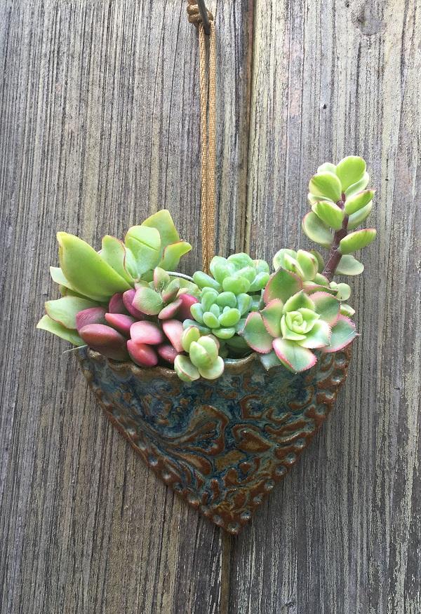 Succulent heart pocket planter planted with Crassula undulata, Anacampseros Sunris, Sedum clavatum, Portulacaria afra variegata and Aeonium Kiwi