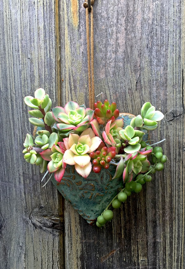 succulent heart planted with Portulacaria afra variegata, Aeonium Kiwi, Sedum rubrotinctum and Senecio rawyeanus