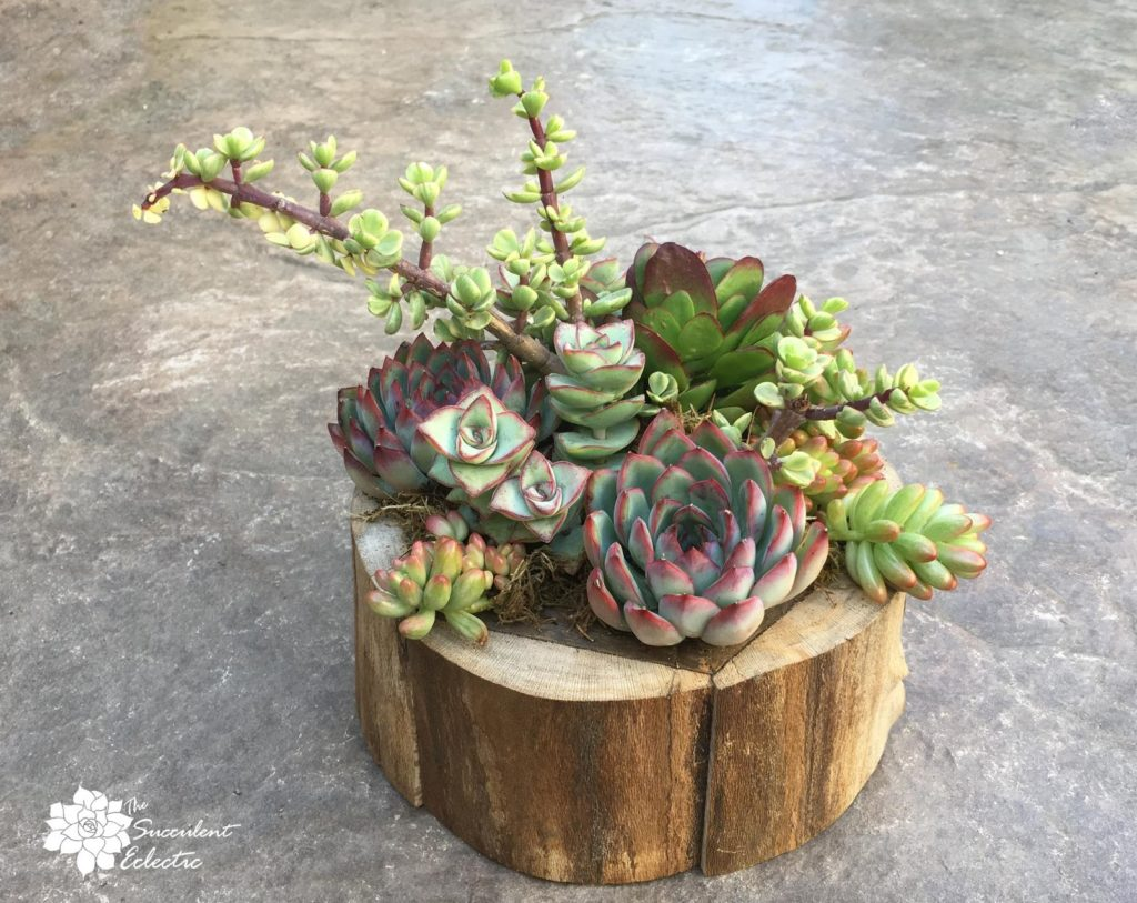 completed succulent arrangement with succulents planted close together