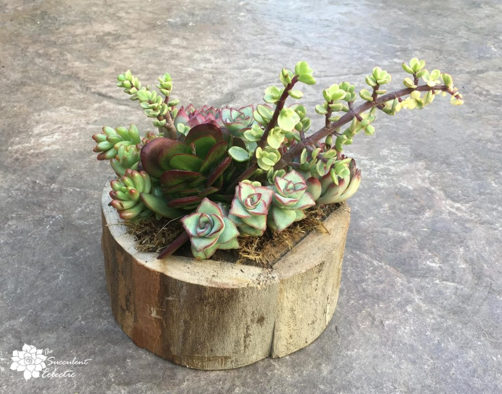 completed succulent arrangement with succulents planted close together, side view