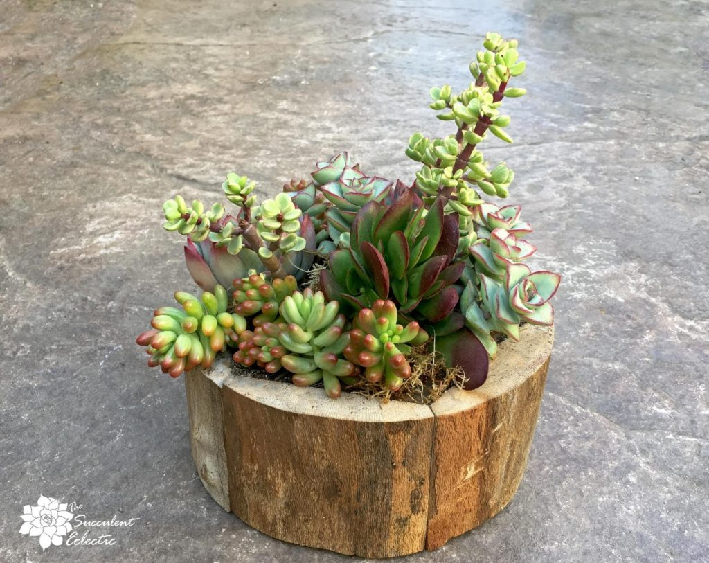 completed succulent arrangement with succulents planted close together, rear view