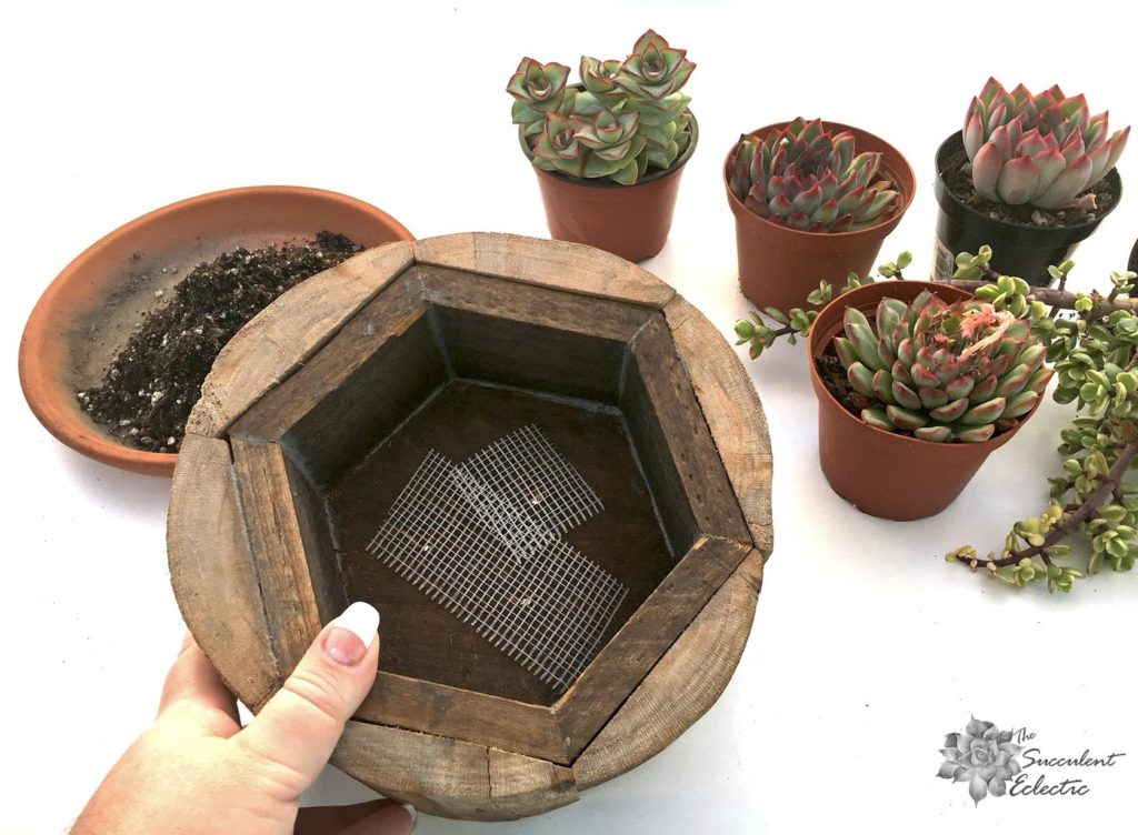planting succulent planter with drainage, cover the drain holse with drywall mesh to keep soil in