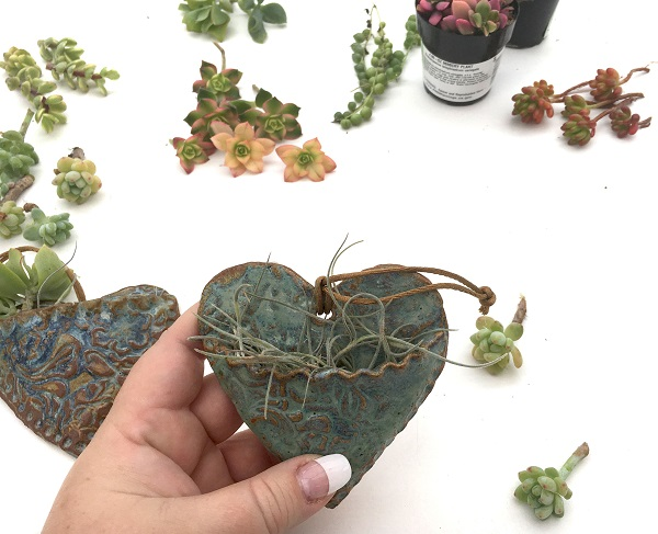 spanish moss is a great growing medium for succulent cuttings
