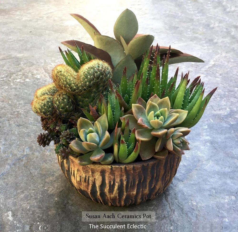 Susan Aach ceramic pot with succulent and cactus arrangement by The Succulent Eclectic