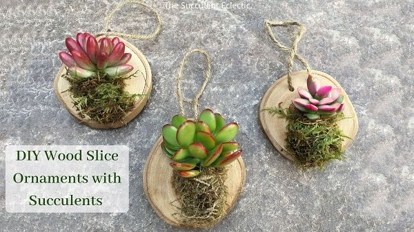 DIY Wood slice ornaments with succulents