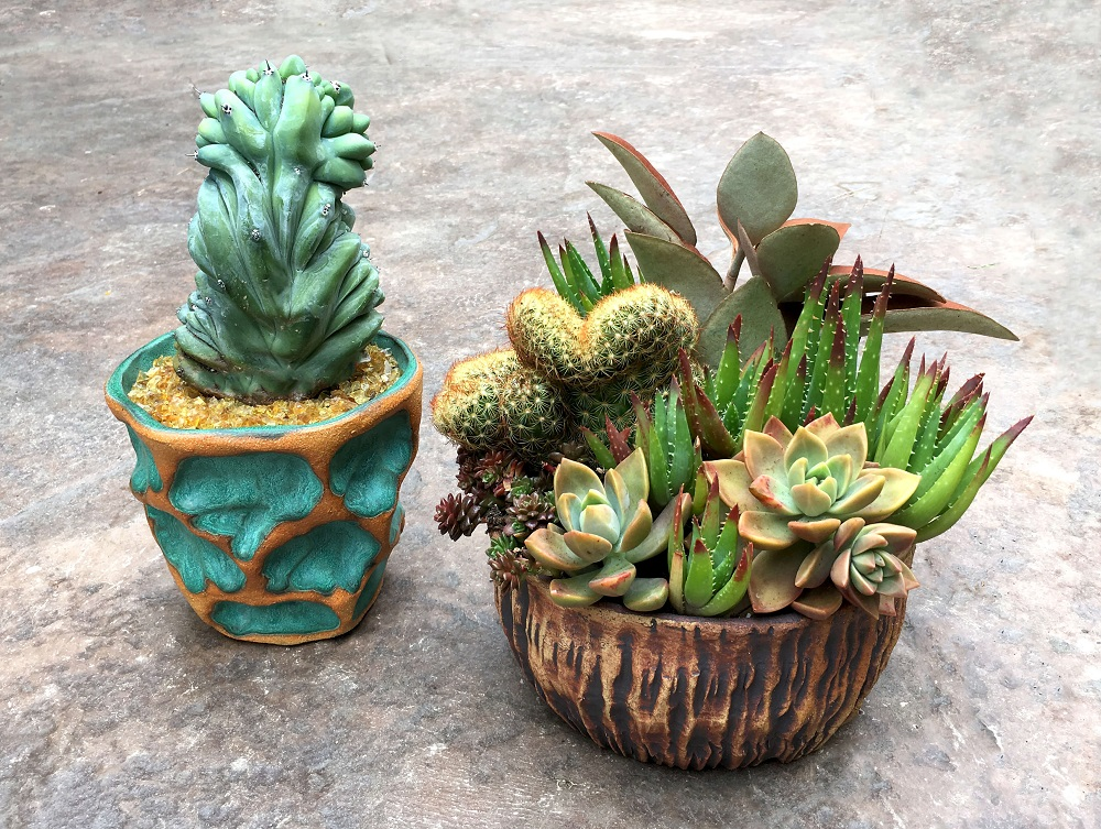 succulent and cactus arrangement in Susan Aach ceramic pots