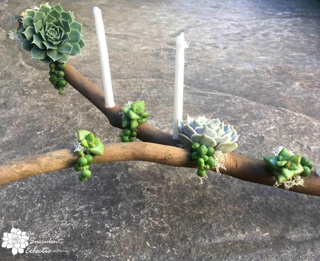 completed DIY menorah succulent branch closeup