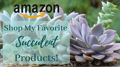 Shop Amazon with The Succulent Eclectic