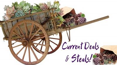 Shop current succulent sales and special discounts