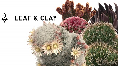 Shop Leaf & Clay with The Succulent Eclectic