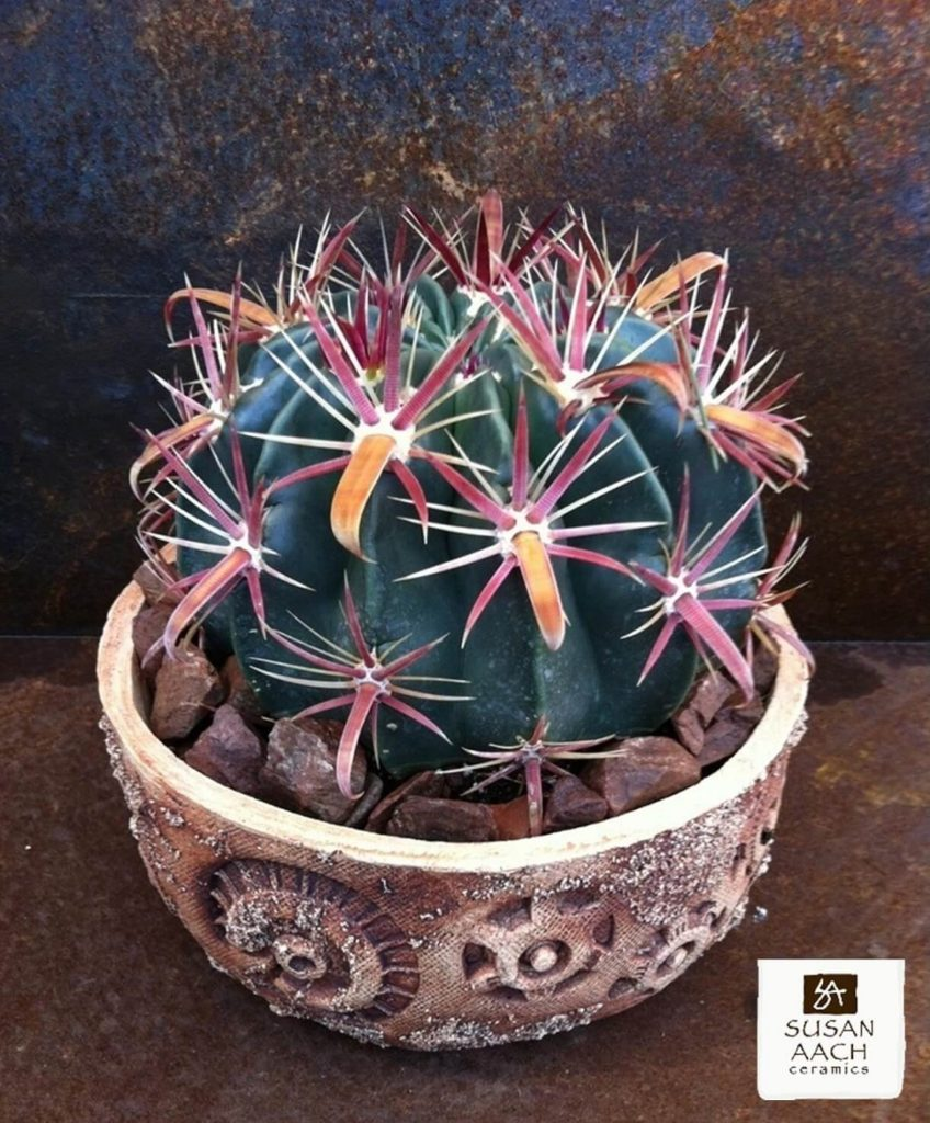 chunky succulent top dressing - Susan Aach handmade ceramic pot with ferocactus latispinus