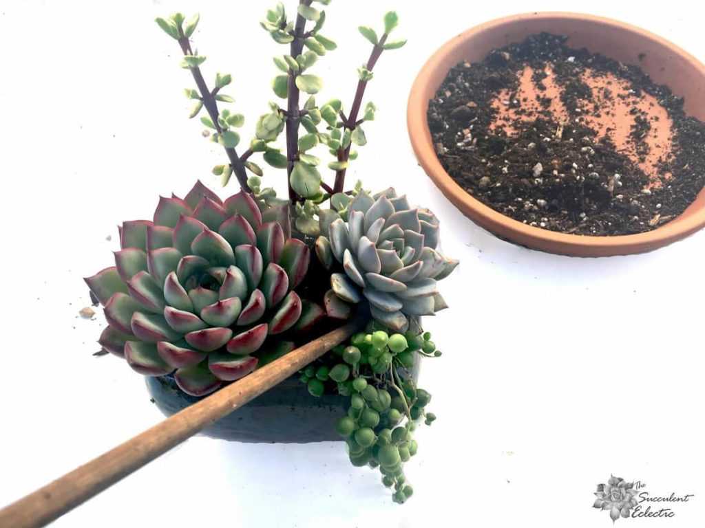use chopstick to tuck in succulent roots