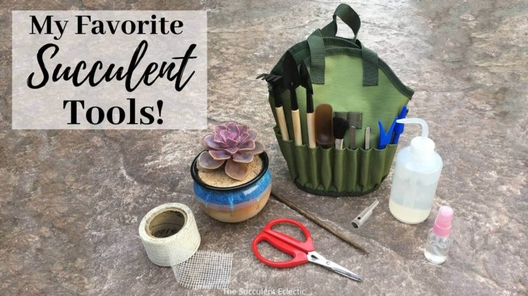 my favorite succulent tools -