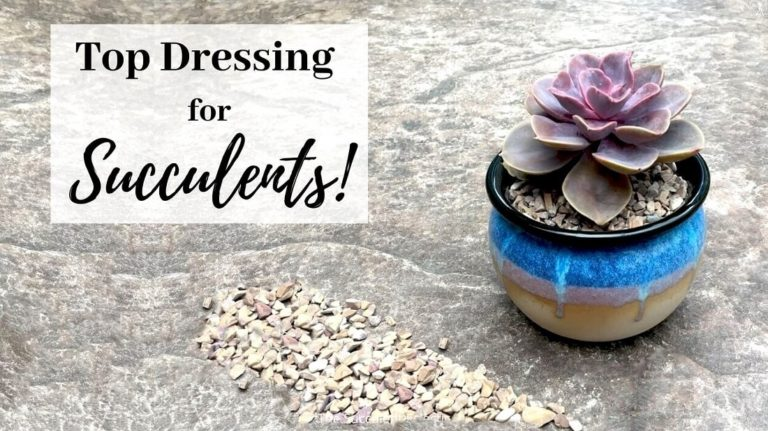 top dressing for succulents