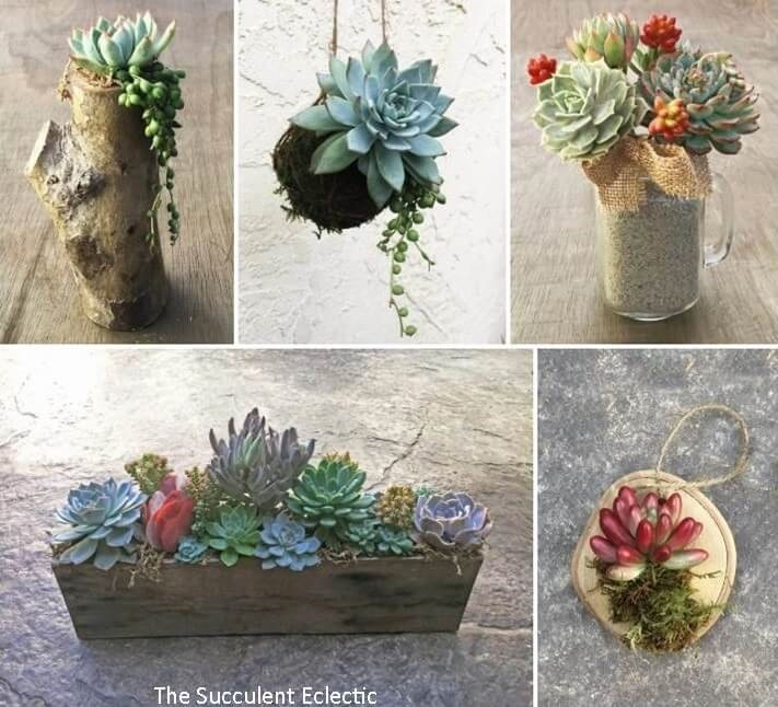 succulent crafts and DIYs