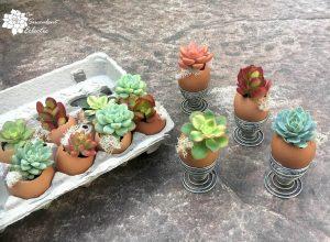 DIY Succulent Eggshell Planters