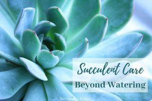 How to Care for Succulents ~ Beyond Watering