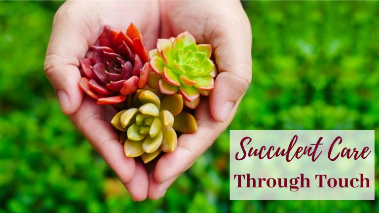 succulent care through touch