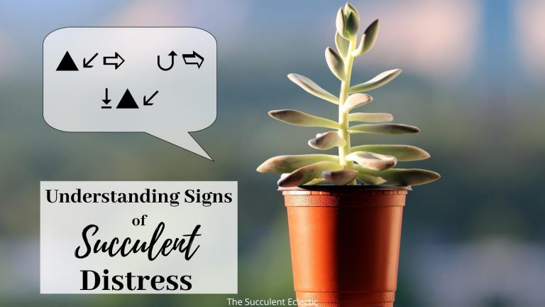 understanding succulents signs of distress