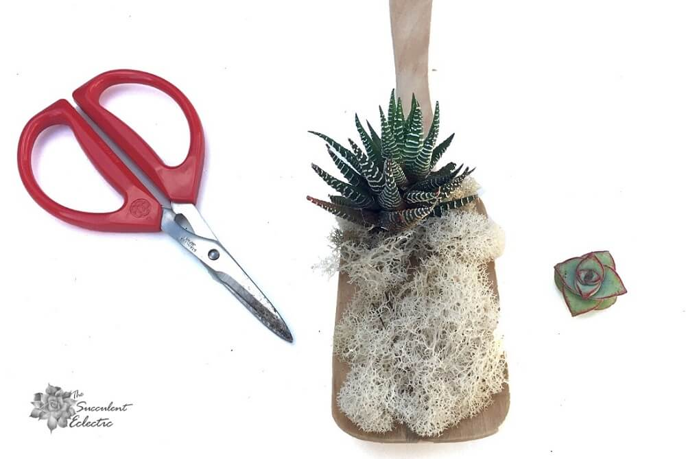 attaching succulents to the wooden handle stick