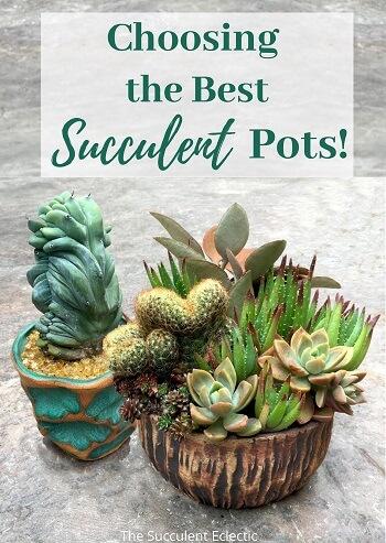 Choosing the best succulent pots, image for Pinterest