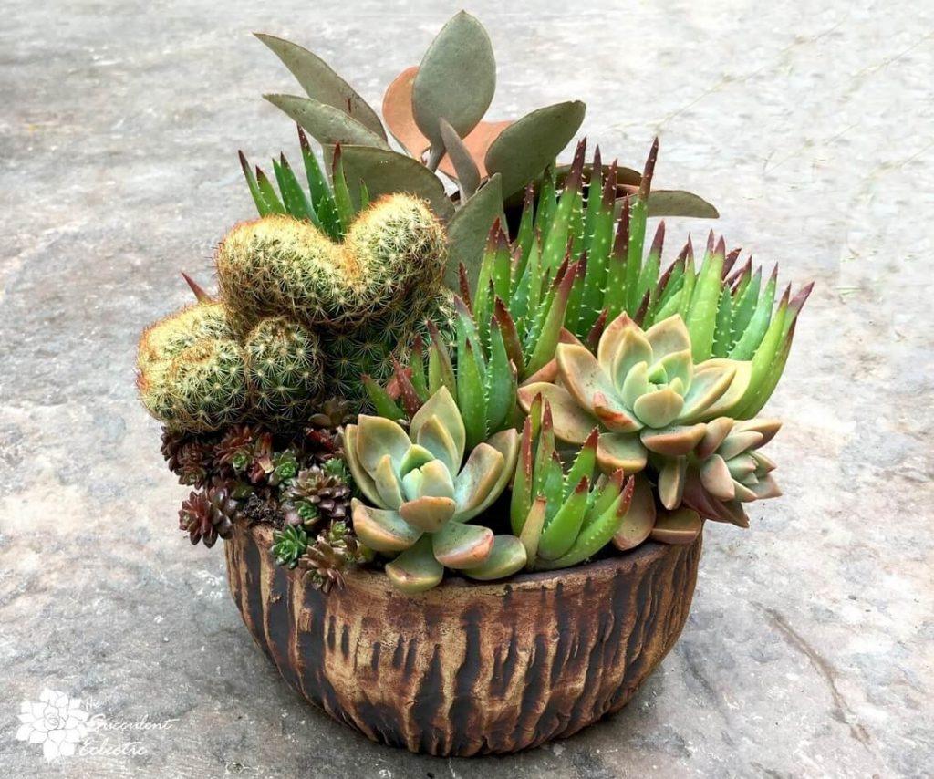 gorgeous succulent arrangement in ceramic Susan Aach pot