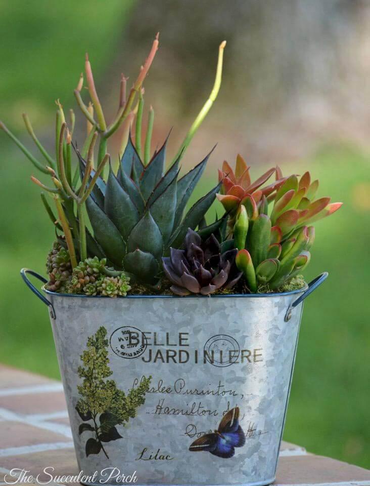 gorgeous succulent arrangement in a metal pot buy Cinday Davison of The Succulent Perch