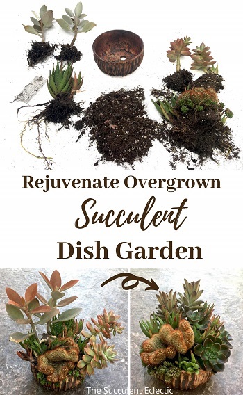 Rework Succulent Dish Garden