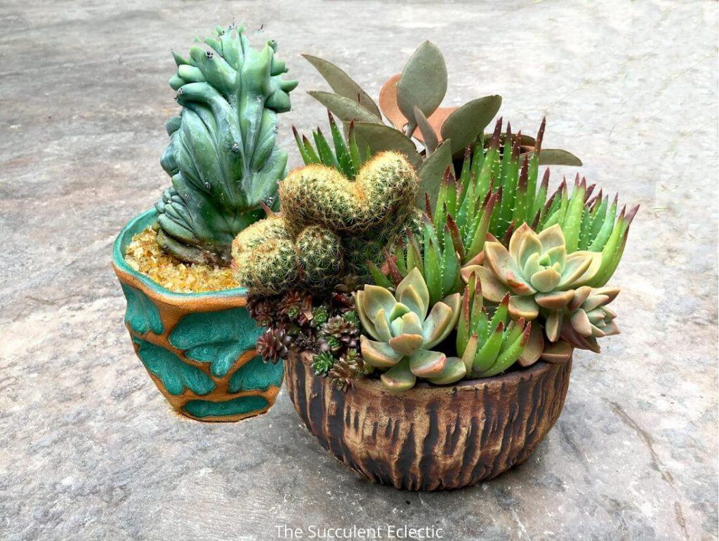 Choosing The Best Succulent Pots The Succulent Eclectic