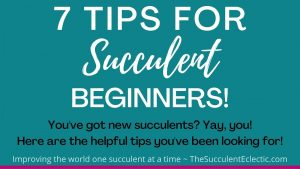 7 Succulent Care Tips for Beginners [Infographic]