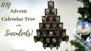 DIY Advent Calendar Tree w/ Succulents!