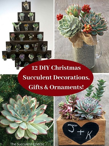 12 DIY Christmas Succulent Decorations, Gifts & Ornaments!