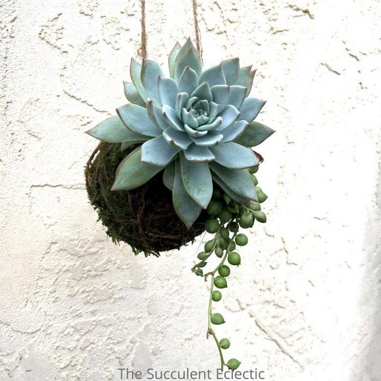diy succulent kokedama balls decorations and succulent gifts