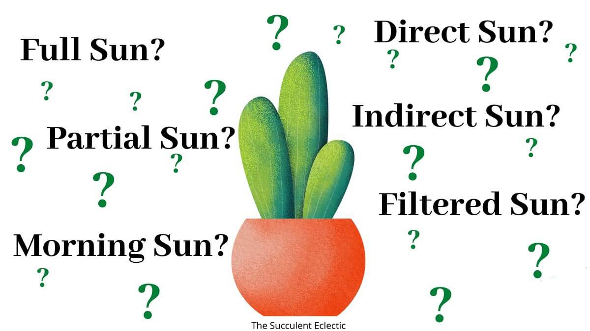Direct Sun, Full Sun, Indirect Sunlight? Understanding Sun Exposure for Succulents