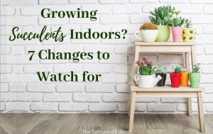 Growing Succulents Indoors? 7 Changes to Watch For