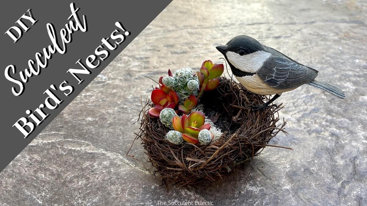 Simple Succulent Bird's Nest Craft!